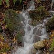 Forest Stream Cascade Poster