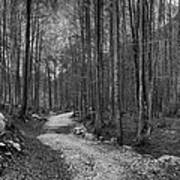 Forest Trail Bw Poster