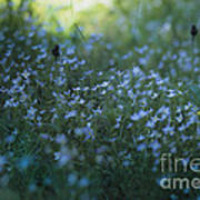 Forget Me-nots Poster