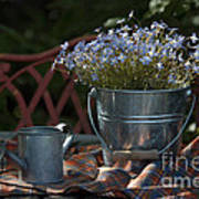 Forget-me-nots And Small Watering Can  Poster