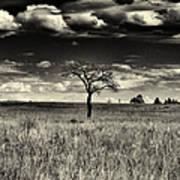 Forgotten Tree Poster