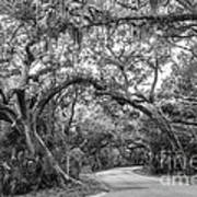 Fort Clinch Live Oaks Poster