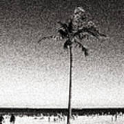 Fort Lauderdale Palm Tree Poster