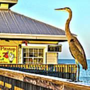 Fort Myers Beach Bird On Pier Poster