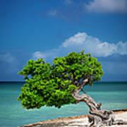 Fototi Tree - Aruba Poster
