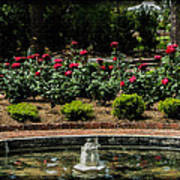 Fountain Of Roses Poster