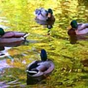 Four Ducks On Pond Poster