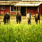 Four Horses Poster