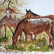 Four Horses Grazing Poster