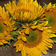 Four Sunflowers Poster