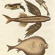 Four Wonderful Fish Poster