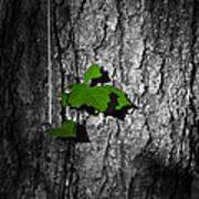 Fox Grape On Pine Poster