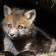 Fox Kit In Den Poster