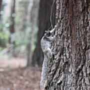 Fox Squirrel Vertical Poster