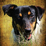 Fox Terrier Dog Poster