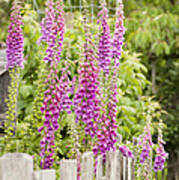Foxglove Fence Poster