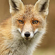 Foxy Face Poster