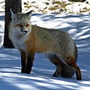 Foxy Shadows Poster