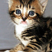 Foxy The Kittens Big Eyes Poster