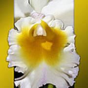 Framed White Orchid Poster