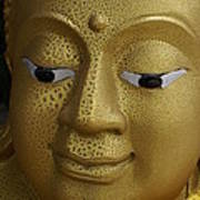 Freckled Gold Buddha Poster