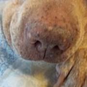 Freckled Nose Poster