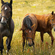 Free Happy Horse Joy On Samsoe Island Denmark  Poster