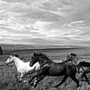 Free Range Running Horses Poster