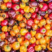Fresh Colorful Hot Peppers Poster