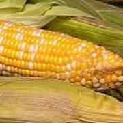 Fresh Corn At Farmers Market Poster by Teri Virbickis