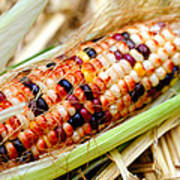 Fresh Decorative Indian Corn Poster