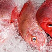 Fresh Fish 05 Poster