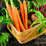 Fresh Picked Healthy Garden Vegetables Poster