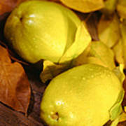 Fresh Quince Poster