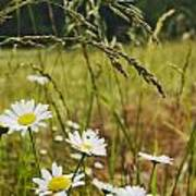 Fresh Rain Fresh Flowers Poster