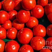 Fresh Ripe Red Tomatoes Poster by Edward Fielding