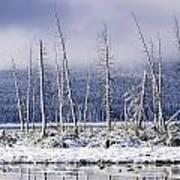 Fresh Snowfall And Bare Trees Poster