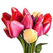 Fresh Spring Tulip Flowers Poster