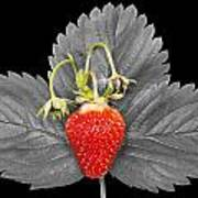 Fresh Strawberry And Leaves Poster