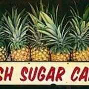 Fresh Sugar Cane Poster