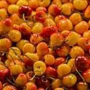 Fresh Yellow Cherries Poster