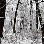 Freshly Fallen Snow Poster