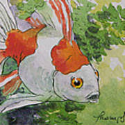 Friendly Fantail Tiny Goldfish Painting Poster