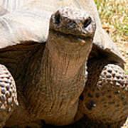 Friendly Tortoise Poster