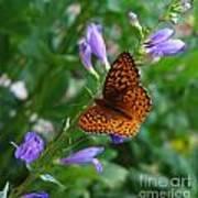 Fritillary Butterfly Poster