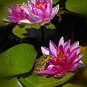 Frog And Water Lily Poster