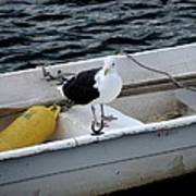 From Rockport Ma A Seagull Chilling Out In A Rowboat Poster