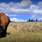 Frontview Of American Bison Poster