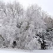 Frost Covered Trees Poster