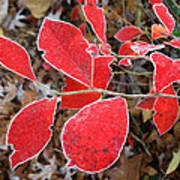Frosted Blueberry Leaves Poster